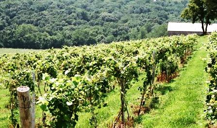 taste_local_wines